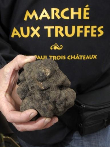 A la recherche de la truffe noire